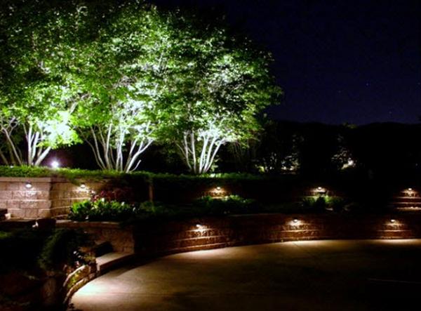 Bóng đèn hắt cây, gốc cây trong sân vườn
